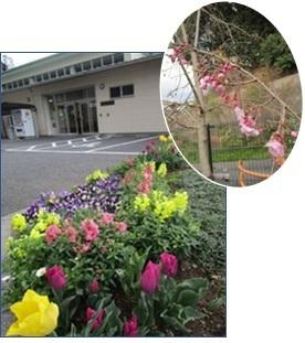 上大岡コミハ花.jpg